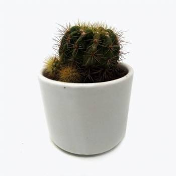 Ceramic succulent pot white